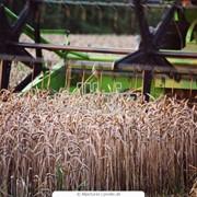 Комбайны сельскохозяйственные фото