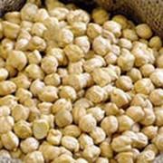 Семена нута фото