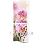Холодильник Snaige RF 34SM-S10021 orhideea фото