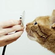 Ветеринарная помощь на дому фото