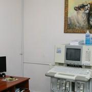 Ультразвуковая диагностика животных фото