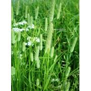 Ароматизатор луговая трава фото