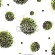 Уничтожение вирусов, бактерий, грибковых поражений фото