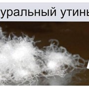 Пух утиный, купить, Продажа, утиного пуха по Украине фото