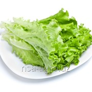 Корневая подкормка листьев салата Raykat Start фото