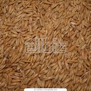 Зерно в Костанае фото