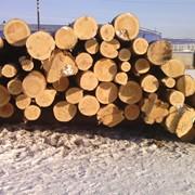 Продам лес круглый фото