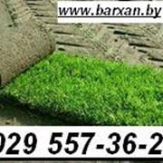 Рулонный газон. Укладка рулонного газона. фото