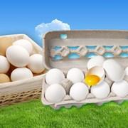 Яйцо С-2 Канашское 1/360 фото