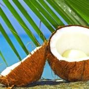 Кокосовое масло РДО про-во Малайзия,Индонезия фото