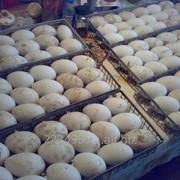 Яйца инкубационные гусиные фото