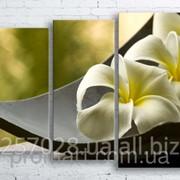 Модульна картина на полотні Біла квітка в чаші код КМ100130-101 фото