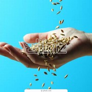 Калибровка семян фото