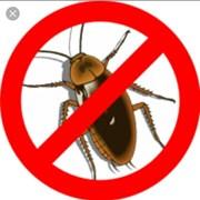 Уничтожение тараканов. Обработка от тараканов  фото