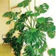 Диагностика растений фото