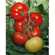 Семена томатов F1 Якиманка фото