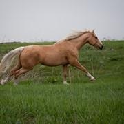 Конные прогулки,прокат лошадей фото
