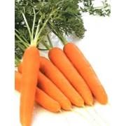 Морковь в Молдове фото