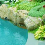 Строительство водоемов (пруды,бассейны) фото