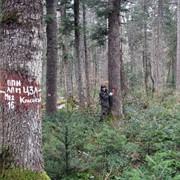 Лесопатологический мониторинг фото
