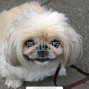 Стерилизация собак фото