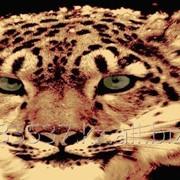 Ковёр HS9025a_AB37 фото