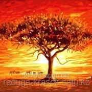 Картина по номерам АФРИКА фото