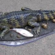 Крокодил композиция, а также другие интересные таксидермические работы, Киев, Украина фото