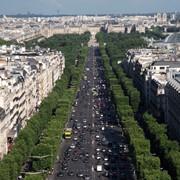 Озеленение улиц и проспектов фото