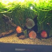 Обслуживание аквариумов, изготовление, установка. фото