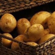 Картофель универсальный в Украине, Купить, Стоимость фото