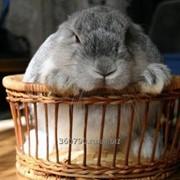 Комбикорм для кроликов ( кк-94) фото