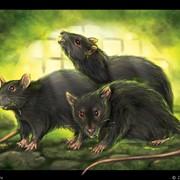 Уничтожение крыс, мышей, тараканов, клопов, блох фото
