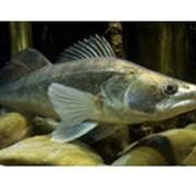 Рыболовство в реках, озерах, водохранилищах, прудах - СУДАК фото