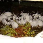 Инвестиции на кроличьем навозе фото