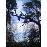 Обрезка дерева на кладбище  фото