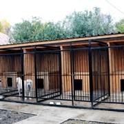 Гостиницы для животных, Зоогостиницы фото