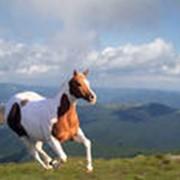 Лошадь для конкура фото