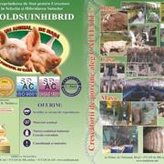 Обучение специалистов по свиноводству в Молдове фото