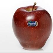 Яблоки Red Delicious фото