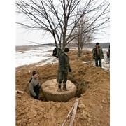 Посадка деревьев-саженцев и кустарников фото