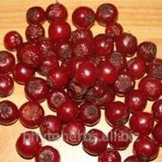 Боярышник плоды - сушеные фото