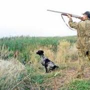 Предоставление услуг в лесном хозяйстве. Охота и рыболовство, снаряжение. фото