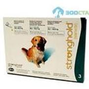 Стронгхолд для собак от 20,1-40кг (цена за 1 пип.) фото