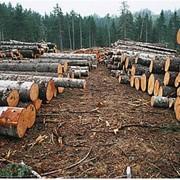 Обработка древесины фото