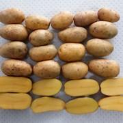 Картофель семенной - Крона Элита фото