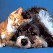 Лечение ваших животных фото