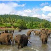 Шри - Ланка.Экскурсионные услуги фото