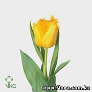 Тюльпан Mon Amoure фото