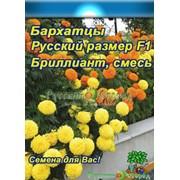 Цветы Бархатцы Бриллиант F1 Русский Размер(15шт) фото